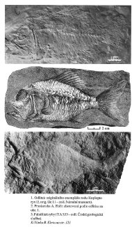 A fake of a Cretaceous fish from Bohemia - Quelle: B. Ekrt, 2003